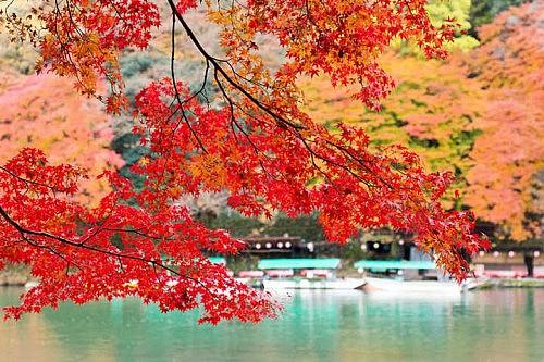 京都 紅葉 情報 2019